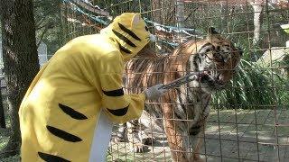 Download A Tiger Birthday Video