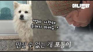 Download 주인을 너무 사랑해서 자신을 못 만지게 하는 개.. ㅣ Dog's Love For His Owner Is So Deep That He Never Let Her Touch Him Video
