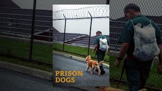 Download Prison Dogs Video