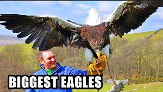 Download Best Eagle Attacks! World's Largest & Deadliest - Golden, Bald and Haast's Eagles Video