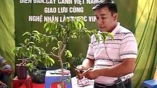 Download Nghệ nhân LNVinh hướng dẫn kỹ thuật tạo hình Bonsai P1.16 - Technical sharing trimming bonsai Video