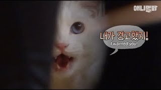 Download 고양이가 경고한다고 얼마나 무서울까 싶었다 이걸 보기전까지는ㅎㄷㄷ.. ㅣ What Did This Cat Warn About, And To Whom? Video