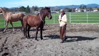 Download Round Pens-Horse Behavior Playing- Horse Fighting - Rick Gore Horsemanship Video