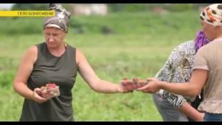 Download На Кременеччині знайшли найбагатше українське село Video