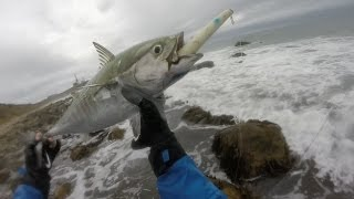 Download Albies Choking Pencil Poppers. Stripers, Albies, Bluefish Blitz MTK. Video