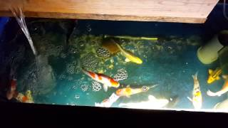 Download Mini koi pond diy by wood Video