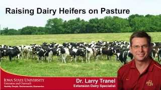 Download Raising Dairy Heifers on Pasture Video