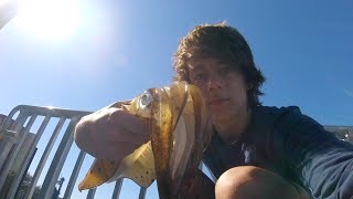 Download SQUID, BREAM and STINGRAY - Catch n Cook - Fishing with DYLAN! Video