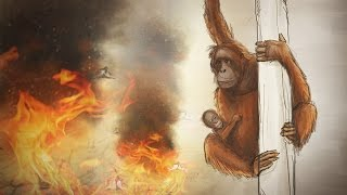 Download Why palm oil kills orangutans – an animated short story Video