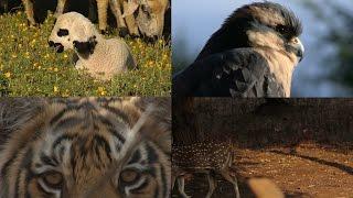 Download International Day for Biological Diversity Video