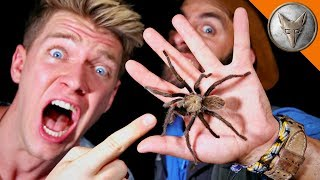 Download WILD Tarantula Challenge! Video