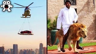 Download Strange Things You'll Only See In Dubai Video