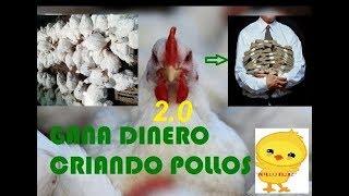 """Download EMPEZAR UN NEGOCIO DESDE CASA """"POLLOS DE ENGORDE″, (broilers, doble pechuga ,parrilleros) 2.0 Video"""
