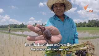 Download Spirit of Asia : The First Rain in Cambodia Video
