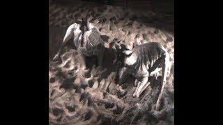 Download Cheyenne Mountain Zoo Giraffe 'Birth Cam' Video
