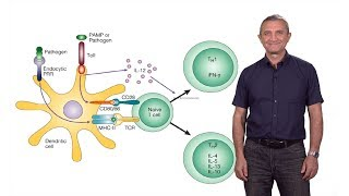 Download Ruslan Medzhitov (Yale / HHMI): The Role of Toll-Like Receptors in the Control of Adaptive Immunity Video