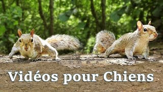 Download Vidéos pour Chiens : Videos for Dogs to Watch Squirrels ✅ Video