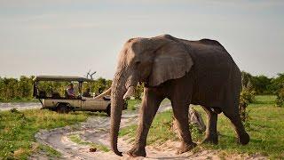 Download Belmond Safaris Video
