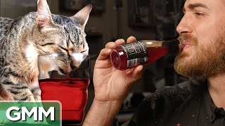 Download Testing Wine For Cats Video
