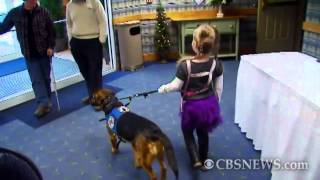 Download Dog Used to Detect Seizures in 6-Year-Old Video