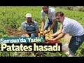 Download Samsun'da 'Yazlık' patates hasadı Video