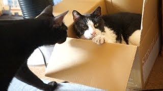 Download 箱猫びっくり3連発 Video
