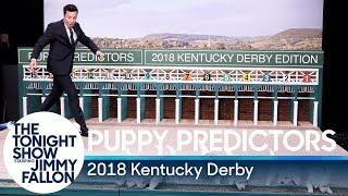 Download Puppies Predict the 2018 Kentucky Derby Video