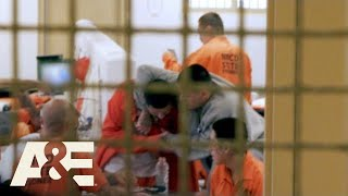 Download Behind Bars: Rookie Year: What's Your Problem, Bro? (Season 2) | A&E Video