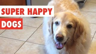 Download Super Happy Dogs | Funny Dog Video Compilation 2017 Video