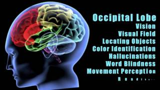 Download Traumatic Brain Injuries: Effects of damage to different lobes of the brain Video
