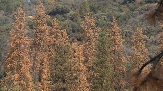 Download 3D maps examine drought effects on California forests Video