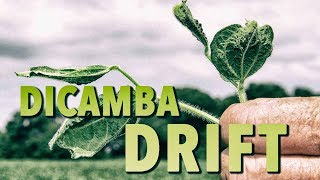 Download Dicamba Drift Spreading Destruction Of Food & Health Video