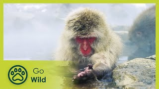 Download Wildest Arctic - The Secrets of Nature Video