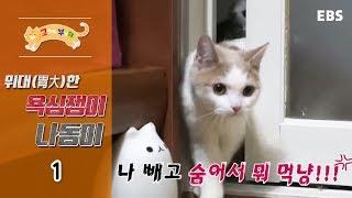 Download 고양이를 부탁해 - 위대한 욕심쟁이 나동이 #001 Video