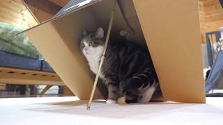 Download 罠にかかるまると、助けるはな。-Maru is caught in the trap, and Hana helps him.- Video