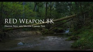 Download RED WEAPON 8K: Digital Still and Motion Camera Quick Test Video