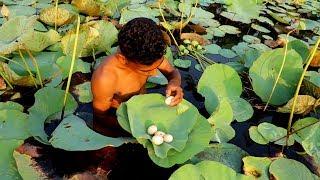 Download Primitive Survival   Find Wild Bird Egg in Lotus Pond and Cooking in Lotus Leaf in Village Video