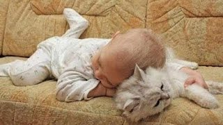 Download Adorable Cats and Babies Cuddling - Babies Love Cats Compilation Video