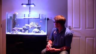 Download Phytoplankton, Rotifers & Copepods Video
