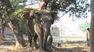 Download Elephant Fair Sonpur p 2 Video