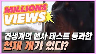 Download 견생계의 멘사 테스트를 통과한 천재 개가 있다?! [현장르포 특종세상 256회] Video