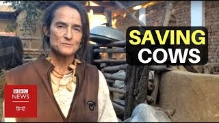 Download This German Woman Is Saving Cows In India (BBC Hindi) Video