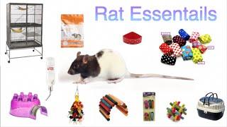 Download Rat Essentials! Video