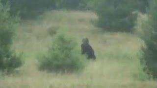Download Clear Pic of Bigfoot Caught on Cam 2016 (Real Sasquatch Proof/Evidence!) Video