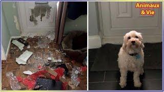 Download Elle laisse son chien seul pendant 3 heures et n'en revient pas de ce qu'elle trouve en... Video
