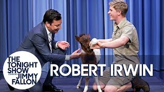 Download Robert Irwin and Jimmy Bottle Feed a Baby Miniature Horse Video