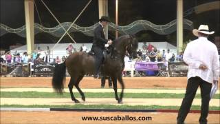 Download Gran Campeonato Caballos de Paso Fino, Spectrum Internacional 2016 Video