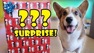 Download CORGI Xmas SURPRISE OPENING 50+ DOG Presents || Life After College: Ep. 578 Video