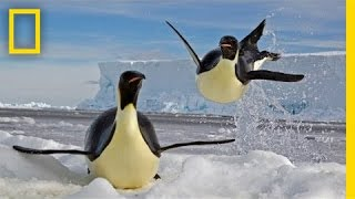 Download Paul Nicklen: Emperors of the Ice | Nat Geo Live Video