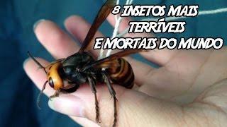 Download 8 Insetos mais Terríveis e Mortais do mundo Video